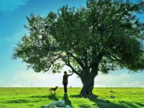 心理测试:假如打雷了,你想在哪一棵树下避雨?测你到底有多聪明