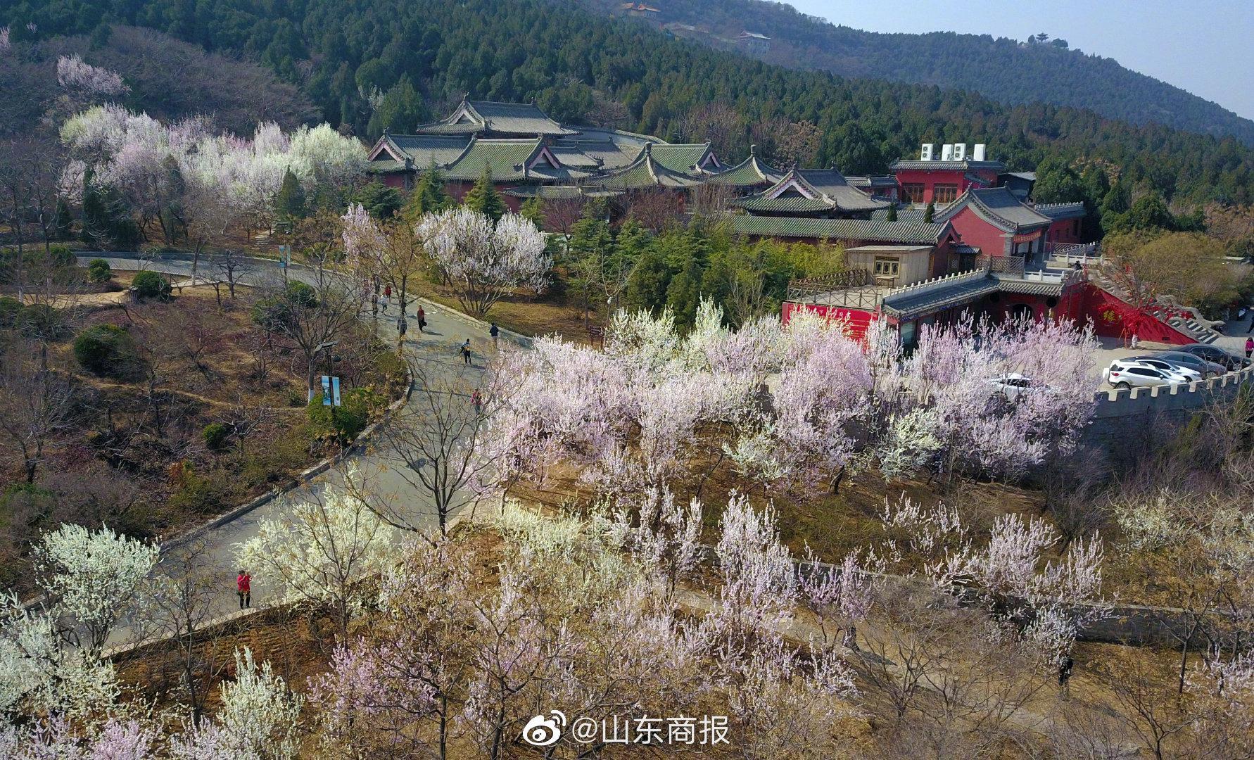 1月26日,千佛山风景区官方微信公众号发布公告……