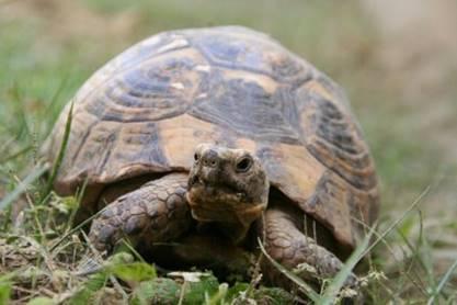 尼泊尔出现世界第5只金龟,百年巨龟再次出现,这意味着什么?