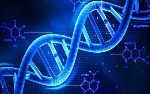 人类的基因能遗传多久?通过计算,研究员找到答案