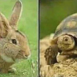 【精彩段子】乌龟和兔子的对比告诉我们一个道理……
