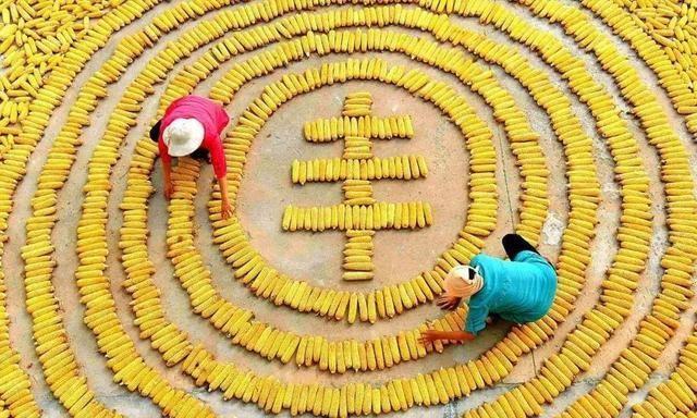 1月27日全国玉米价格,用小麦调控玉米,会有效果吗?