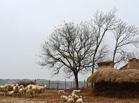 时光裂缝里的山西小村庄,藏着即将消失的西汉北侯古村