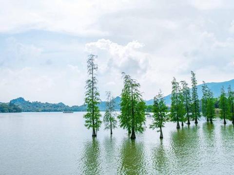 广州肇庆的星湖是我国最美湿地公园之一,四季秀丽温婉