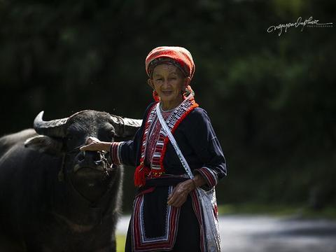 摄影师拍下国外的农村,记录人与水牛的亲密关系