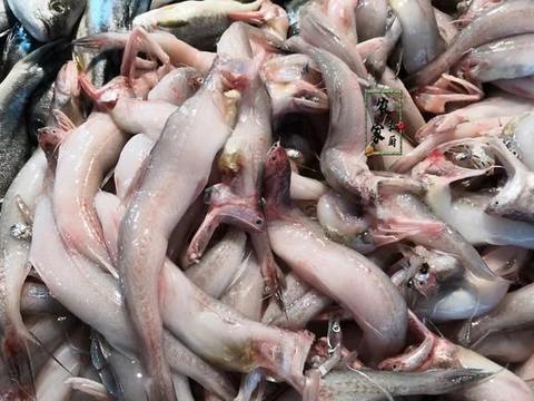 渔民舍不得扔的6种小海鱼,10块钱1斤纯野生非养殖,内行人不还价