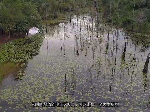 """""""亚马逊河""""有多可怕?就连当地""""土著""""都不敢在里面随便游泳"""