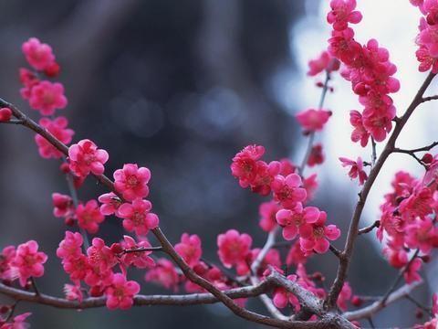 2月中旬,桃花重开,旧爱回眸,四大星座,将成功与旧爱复合