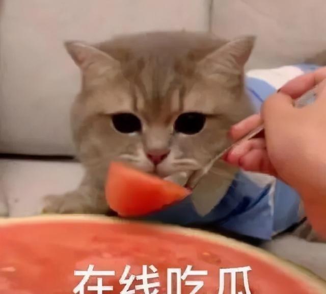 黄磊为孙莉做爱心拌面,夫妻秀恩爱,这是回应与张子枫的绯闻?