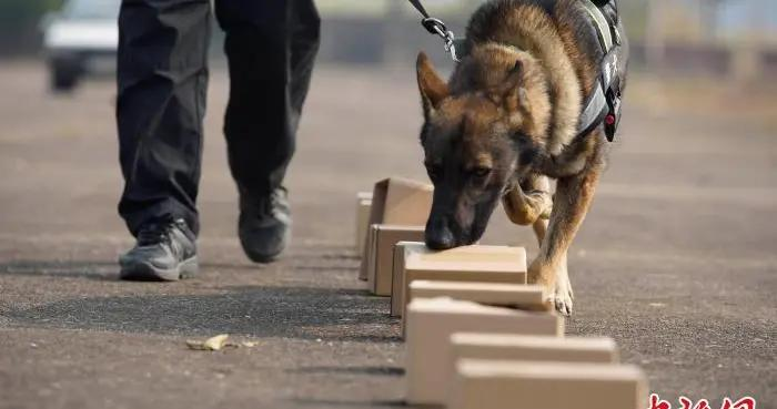 广西南宁铁路公安局警犬列队练兵 备战春运