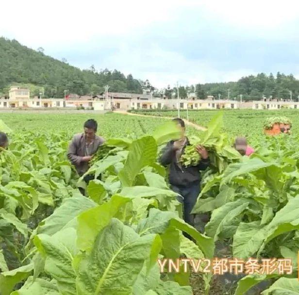 2020年云南省地区生产总值24521.90亿元,经济社会发展稳中有进
