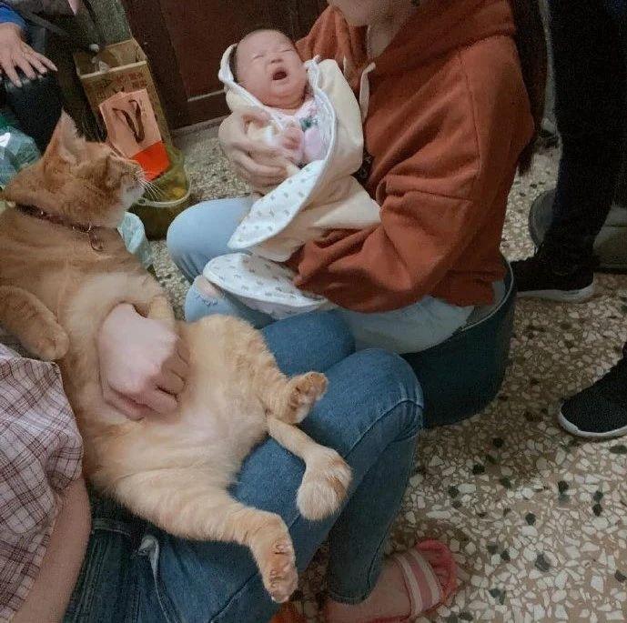 猫跟小宝宝第一次见面,小宝宝一哭,猫都懵了!