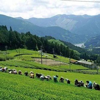 农业贸易百问|日本是如何实施农产品出口促进战略的?