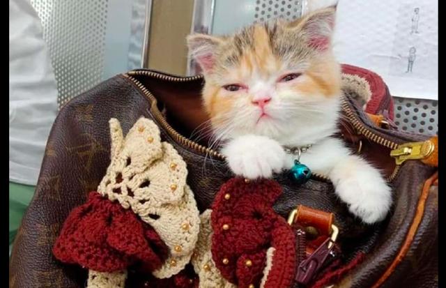 网友把猫装进包里带出来玩,它在里面睡起觉来,猫:最贵的卧室!