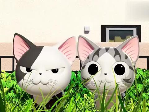 甜甜私房猫:两只小猫咪,他们很可爱,但是也很不同