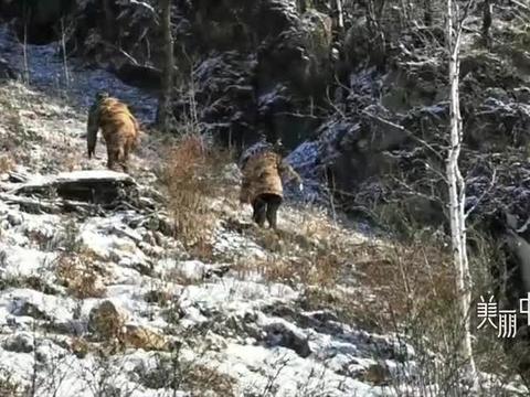 大兴安岭架设野外相机同一地点拍下4种野生动物 罕见画面曝光