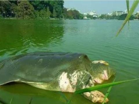 世界上最长寿的动物,嘲讽的是它们却濒临灭绝,中国仅剩两只!