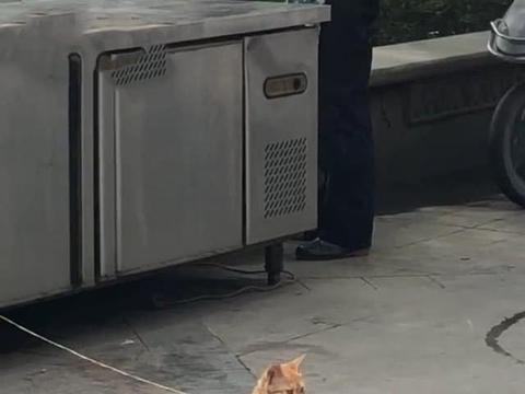 路边一只橘猫被拴住,却让人有些好奇,靠近看清后乐得直不起腰