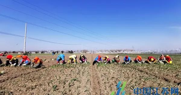 """村企联姻开出""""并蒂莲"""",200村民家门口上班一年增收900万元"""