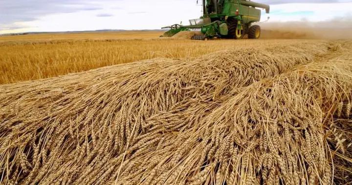 澳麦大丰收却损失50亿,莫里森痛彻骨髓,但中国显然不想改主意