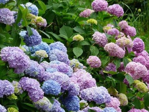 种花养家里,美成了花园,开花大又香,开出一片花海
