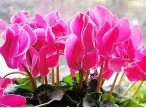 """种花,个个都是高颜值,比""""玫瑰""""好看,黄绿交辉,内敛美"""