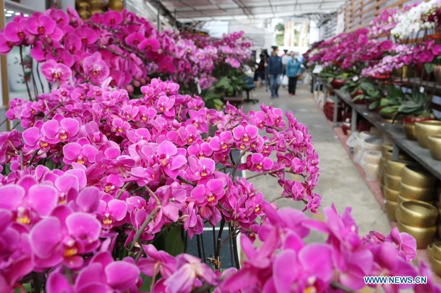 Photo taken on Jan. 28, 2021 shows the orchid cultivation area of Yeung Siu-lung, known as the