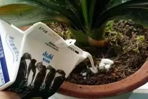 """家庭养花:""""植物杀手""""身上都有什么毛病?"""