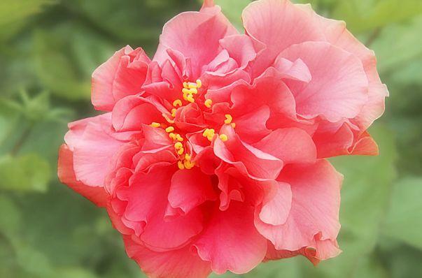 三朵大红花,哪一朵最好看?测出未来这辈子你大概会有几套房