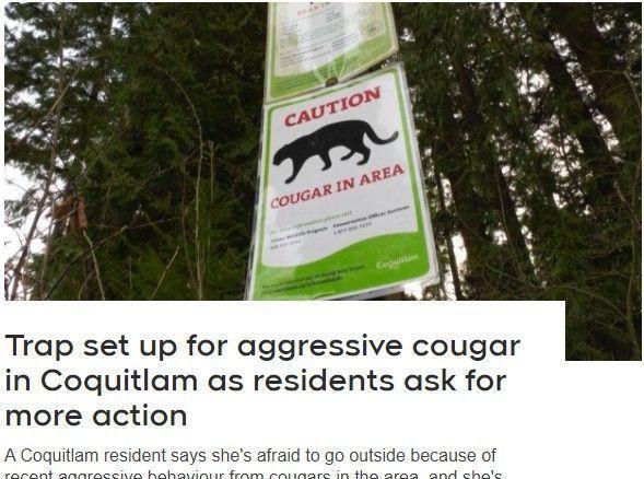 温哥华4只美洲狮蹿到居民家门口,多只宠物狗被袭击图3