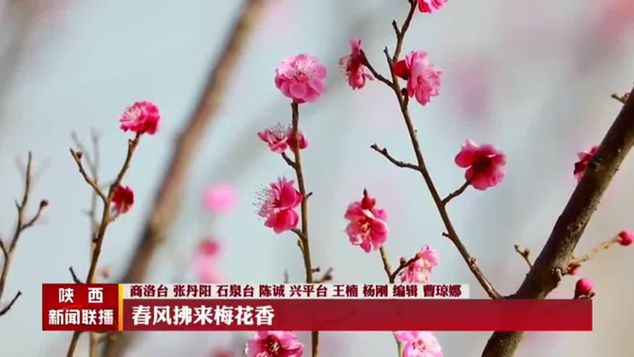 【春到家园】春风拂来梅花香