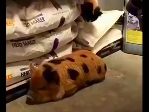 猫:午休时间,总有那么一个调皮捣蛋的!