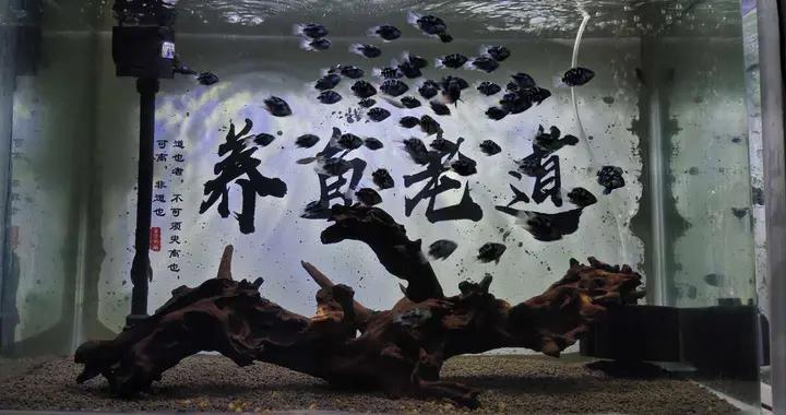 使用丰年虾或者鱼虫,投喂观赏鱼的鱼苗,哪个效果会更好呢?