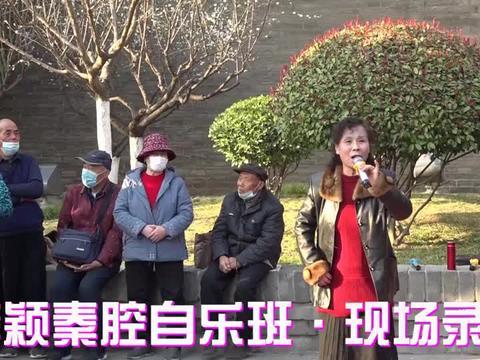《窦娥冤》杀场选段·张霞演唱·西安秦颖秦腔自乐班春节戏曲选播