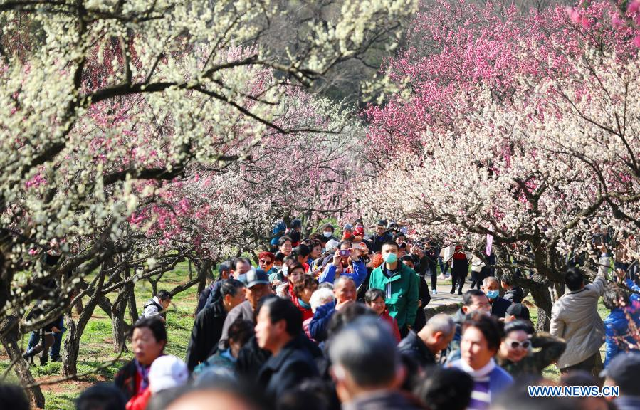 Tourists visit the Meihuashan (Plum Blossom Hill) scenic area in Nanjing, east China's Jiangsu Province, Feb. 19, 2021. A festival featured with plum blossom kicked off here on Friday. (Photo by Ding Liang/Xinhua)