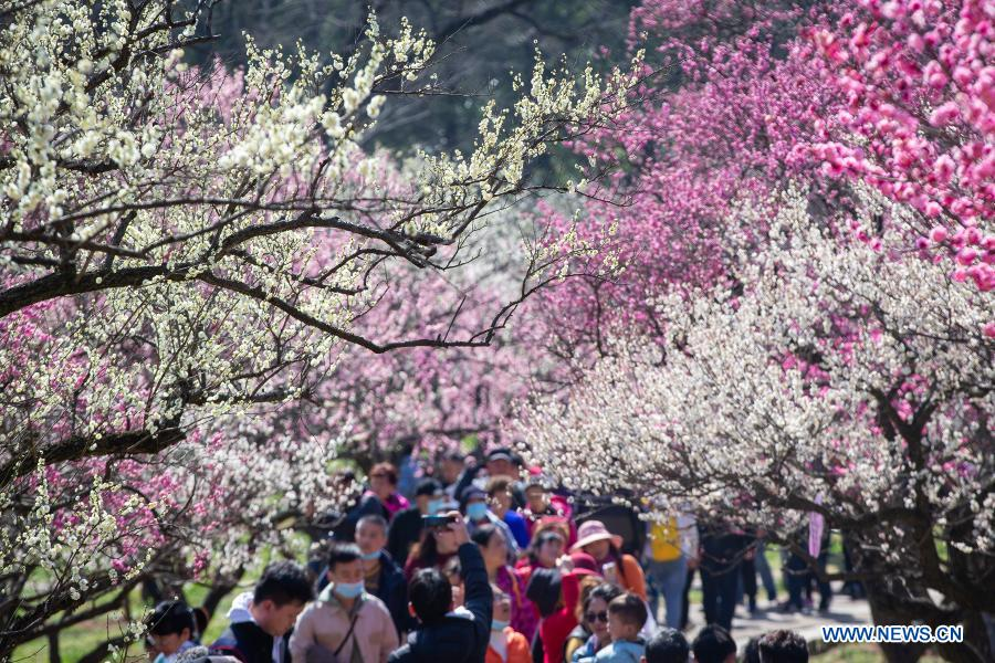 Tourists visit the Meihuashan (Plum Blossom Hill) scenic area in Nanjing, east China's Jiangsu Province, Feb. 19, 2021. A festival featured with plum blossom kicked off here on Friday. (Photo by Su Yang/Xinhua)