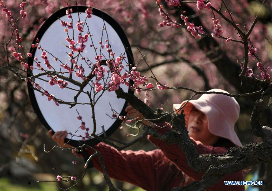 A woman holds a reflector at the Meihuashan (Plum Blossom Hill) scenic area in Nanjing, east China's Jiangsu Province, Feb. 19, 2021. A festival featured with plum blossom kicked off here on Friday. (Photo by Sun Zhongnan/Xinhua)