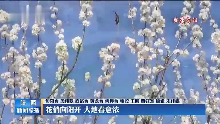 【春到家园】花俏向阳开 大地春意浓