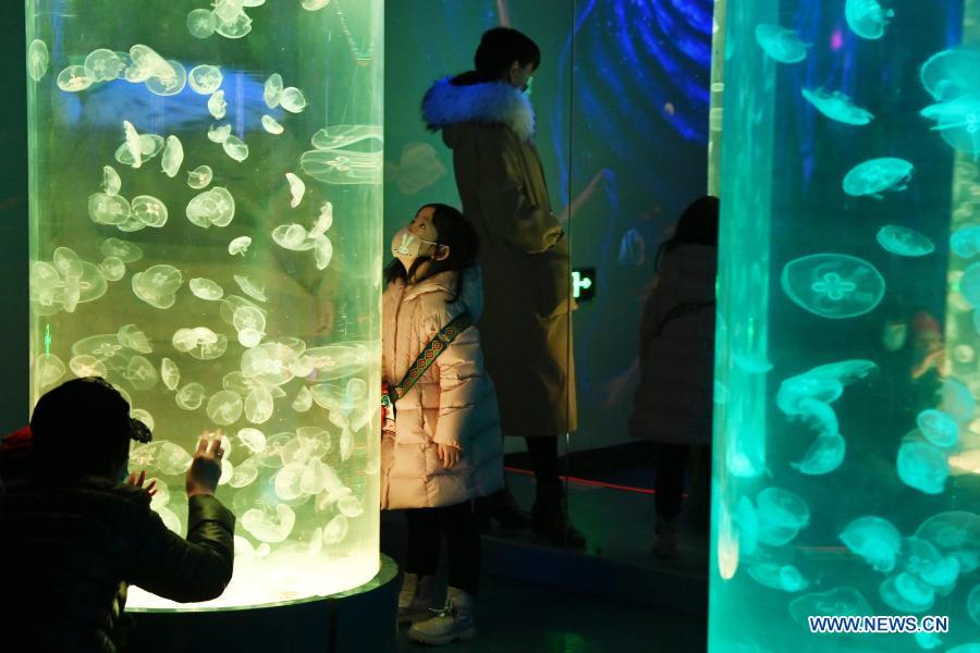 Visitors view jellyfish at Harbin Polarland in Harbin, capital of northeast China's Heilongjiang Province, Feb. 21, 2021. The Harbin Polarland resumed its operation with sufficient COVID-19 prevention and control measures on Sunday. (Xinhua/Wang Jianwei)