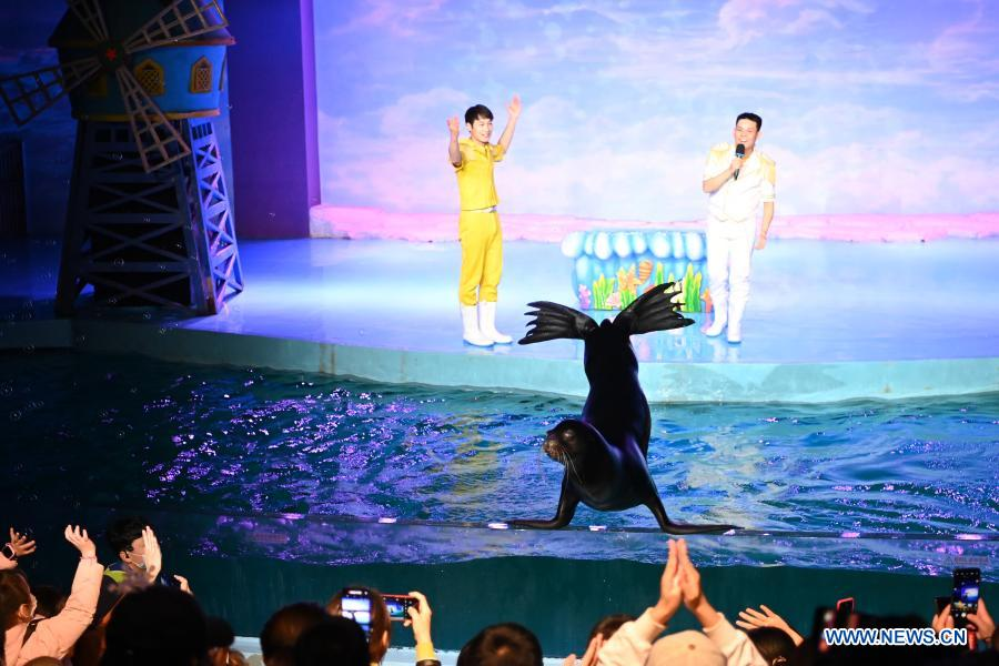 Visitors view performance of a sea lion at Harbin Polarland in Harbin, capital of northeast China's Heilongjiang Province, Feb. 21, 2021. The Harbin Polarland resumed its operation with sufficient COVID-19 prevention and control measures on Sunday. (Xinhua/Wang Jianwei)
