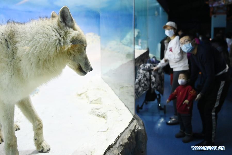 Visitors view an Arctic wolf at Harbin Polarland in Harbin, capital of northeast China's Heilongjiang Province, Feb. 21, 2021. The Harbin Polarland resumed its operation with sufficient COVID-19 prevention and control measures on Sunday. (Xinhua/Wang Jianwei)