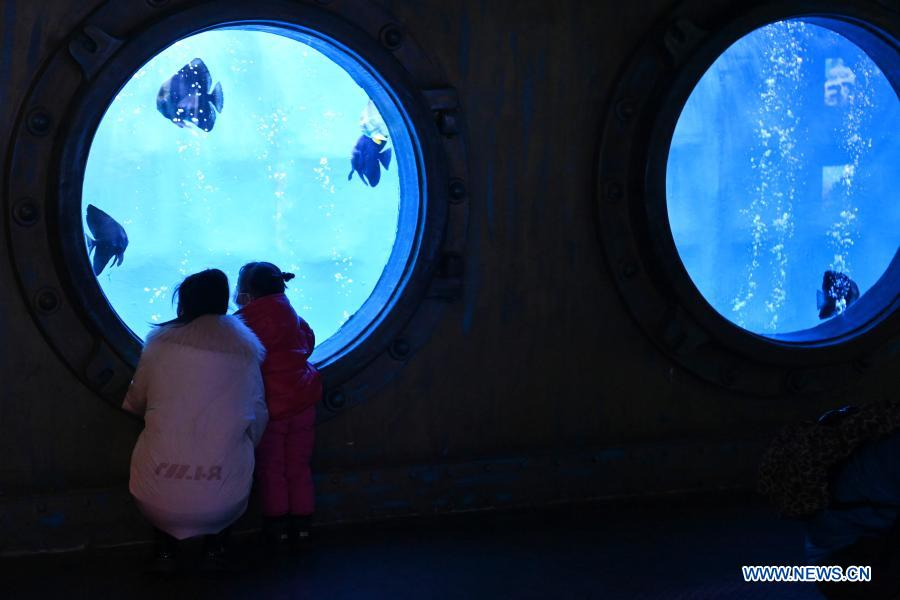 Visitors view marine fish at Harbin Polarland in Harbin, capital of northeast China's Heilongjiang Province, Feb. 21, 2021. The Harbin Polarland resumed its operation with sufficient COVID-19 prevention and control measures on Sunday. (Xinhua/Wang Jianwei)