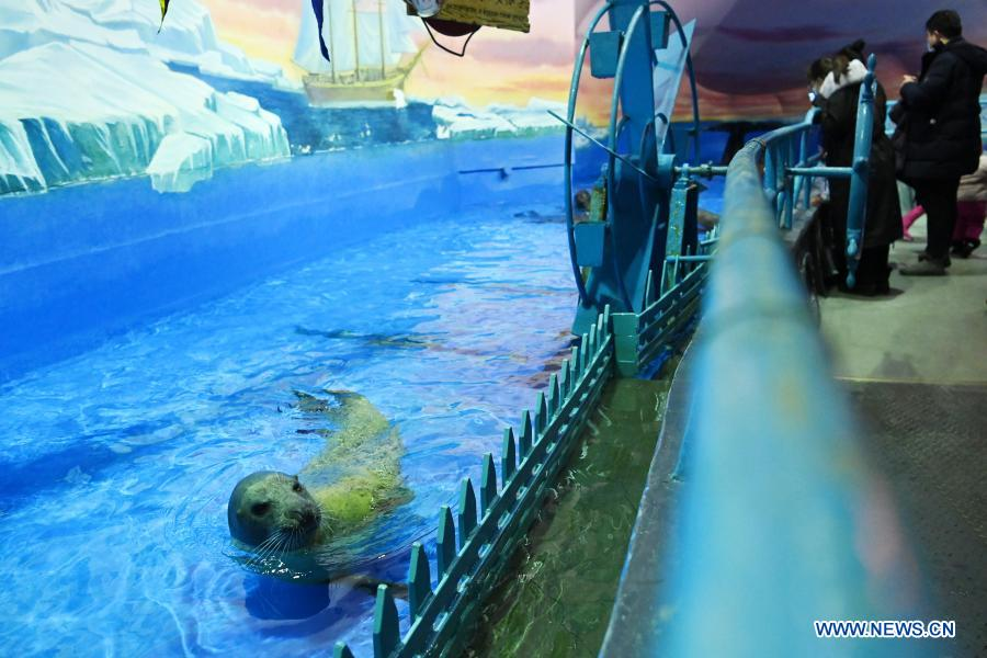 Visitors view a seal at Harbin Polarland in Harbin, capital of northeast China's Heilongjiang Province, Feb. 21, 2021. The Harbin Polarland resumed its operation with sufficient COVID-19 prevention and control measures on Sunday. (Xinhua/Wang Jianwei)