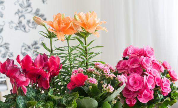 学会用磷酸二氢钾,一样能保障开花质量