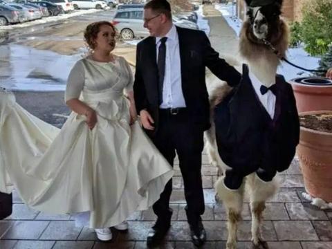 美国大学生牵着一头羊驼去参加姐姐的婚礼,只为五年前的一个承诺