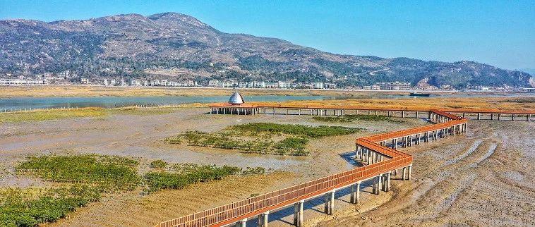 """中国最北的红树林!温州这片区域""""变身""""海上公园,目测要火"""