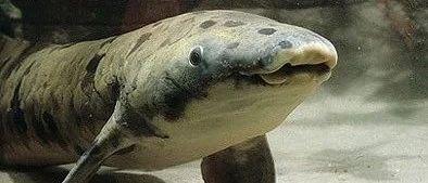 离上岸一步之遥,基因组最大动物成进化路上最大咸鱼!