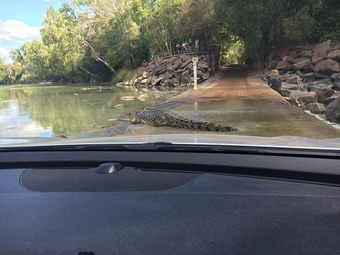 男子开车路过桥面,旁边爬出的东西吓得车主不敢前进
