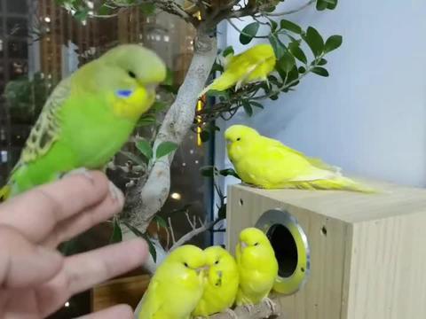 经过军事化训练的小鹦鹉站成一排,太听话了吧!