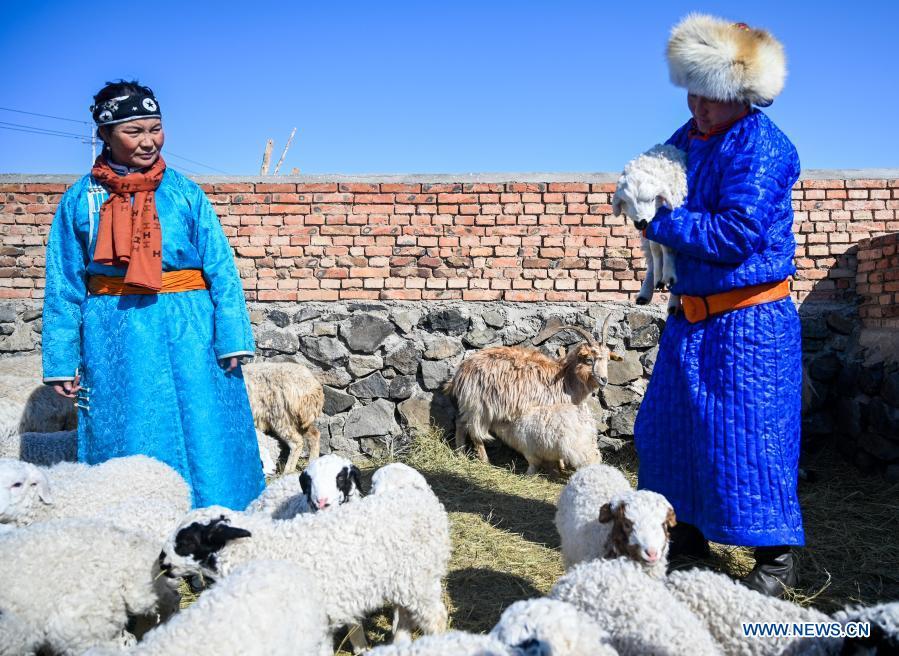 Shepherds check lambs in Xilinhot, north China's Inner Mongolia Autonomous Region, Feb. 24, 2021. Shepherds on Xilingol grassland are busy taking care of the lambs as warmer days approach. (Xinhua/Lian Zhen)
